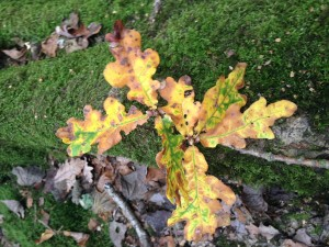 Colour inspiration from Autumn Leaves